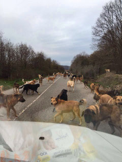 Turkey Dogs A road full